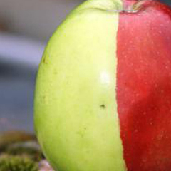 Photo : Pomme bi-colore