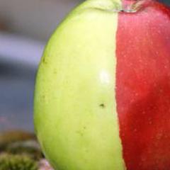 Photo : Pomme bi-colore
