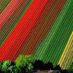 #beau #couleurs #fleurs
