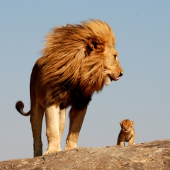 Mufasa et Simba : photo !