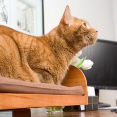 Photo : Boîte à chat