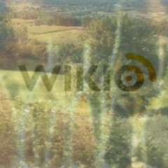 Photo : Wikio : champagne ou campagne ?