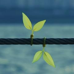 Photo : Leaf tie : liens et feuilles