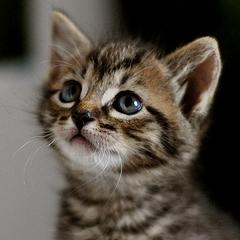 Photo : TuttiCat.com