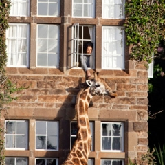 Photo : Manoir aux girafes
