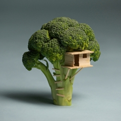 Photo : Maison Brocoli