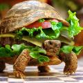 Hamburger de tortue