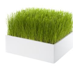 Photo : Pré vert