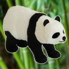 Photo : Clé USB panda WWF