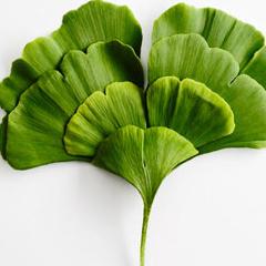 Photo : Corps en plantes