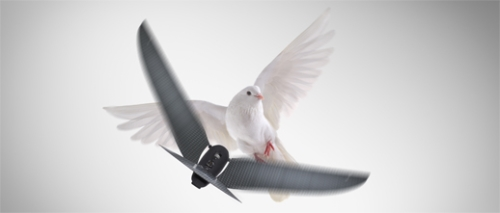 Oiseau drone Bionic Bird : photo