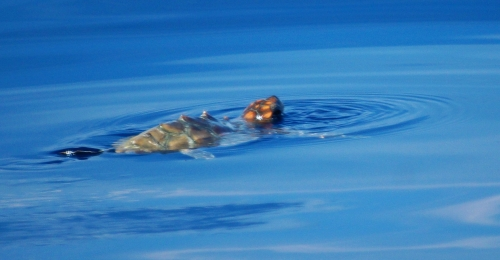 Tortue marine (photo)